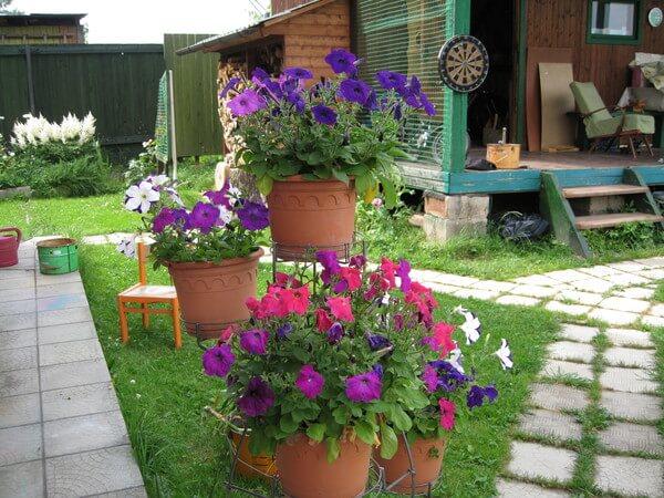 На даче цветы в горшках