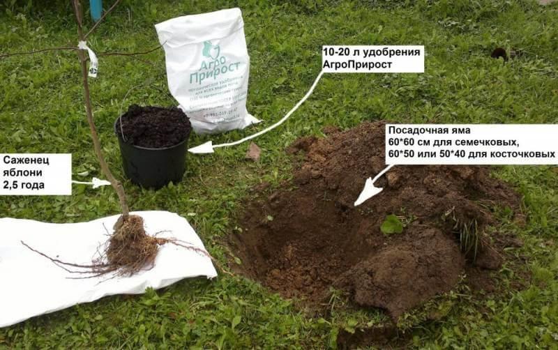 Как подготовить место для посадки саженцев яблони