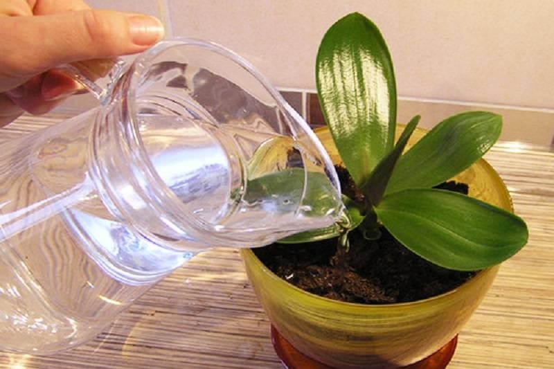 какая должна быть вода для полива орхидеи