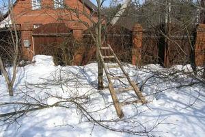 обрезка слив в зимний период