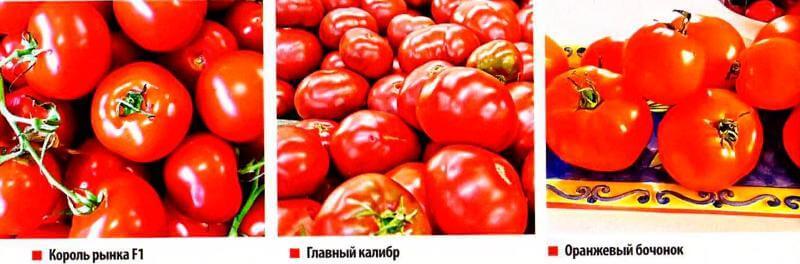 Выращивание томатов в пленочной теплице и открытом грунте