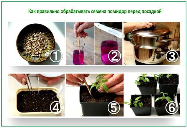 Как правильно обрабатывать семена томатов перед посадкой