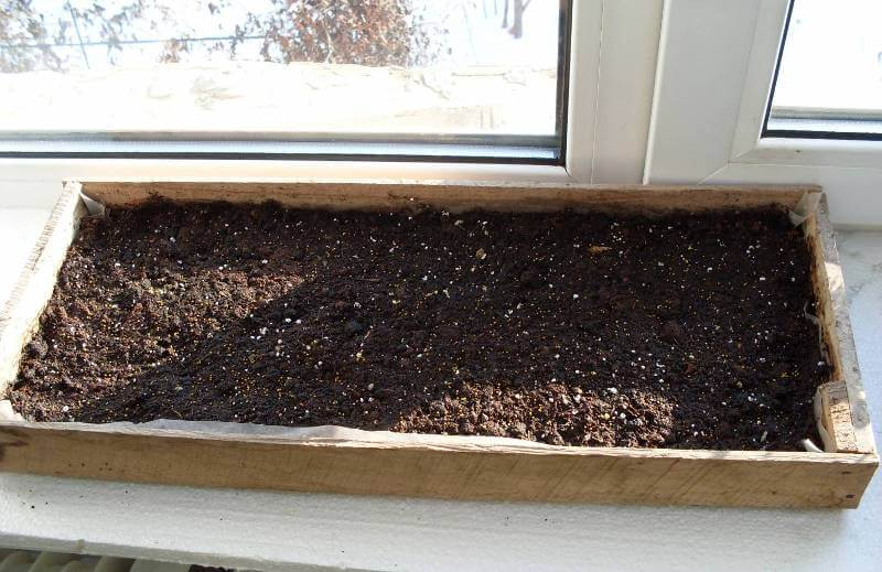 почва для посева петунии на рассаду