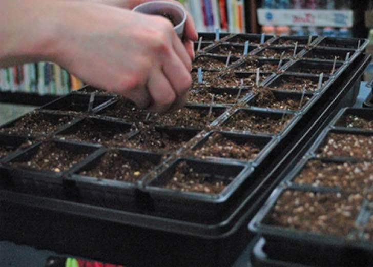 Сеем семена