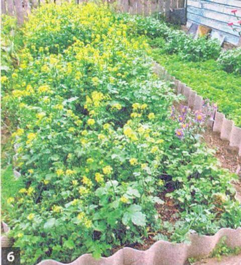 Как увеличить урожай картофеля и уменьшить трудозатраты