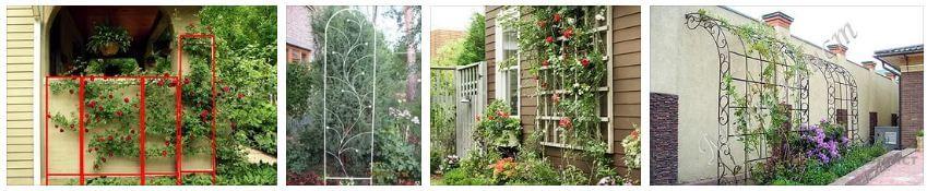 Разновидности опор для вьющихся растений