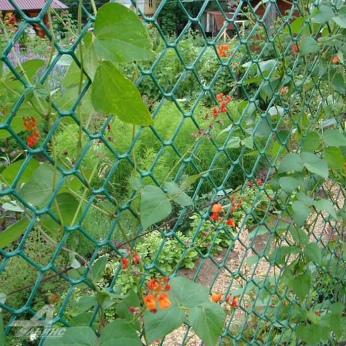 Опора для плетистых растений из сетки рабицы