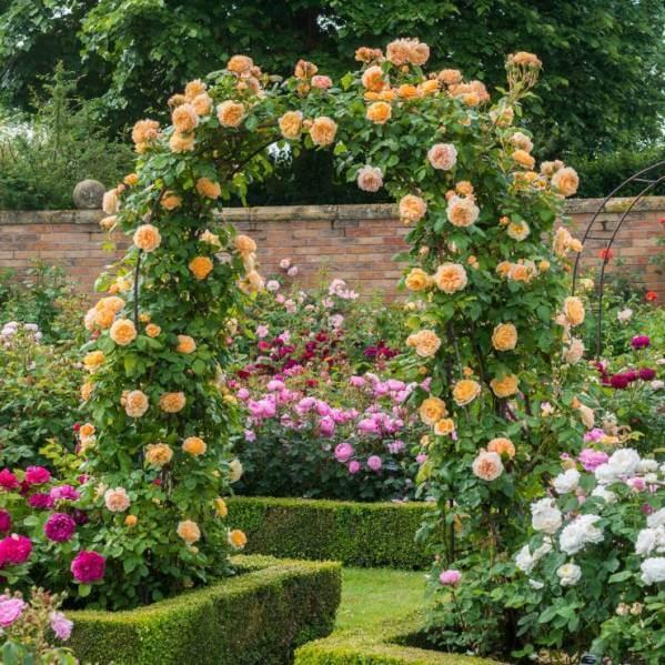 арка для плетистых растений