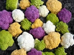 об особенностях цветной капусты