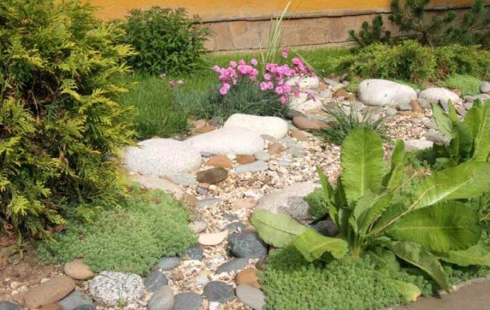 Какие растения посадить возле сухого ручья