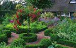 Декоративные растения на приусадебном участке: советы по выбору