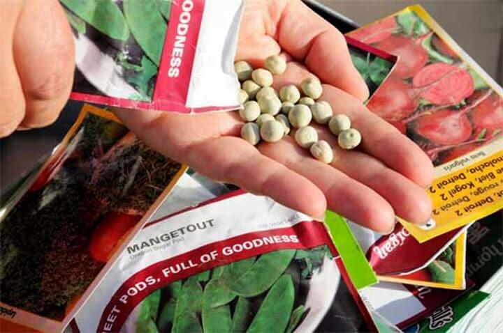 5 правил выбора семян