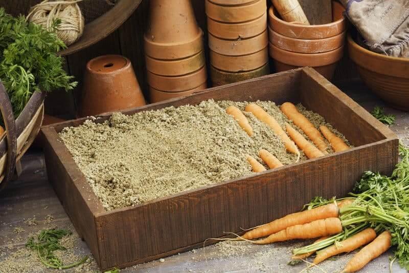 Как сохранить морковь в квартире