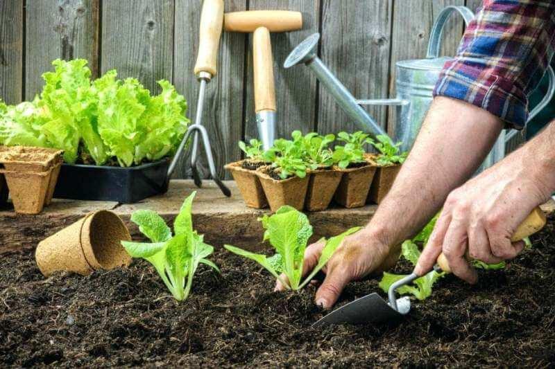 Советы и секреты по уходу за огородом