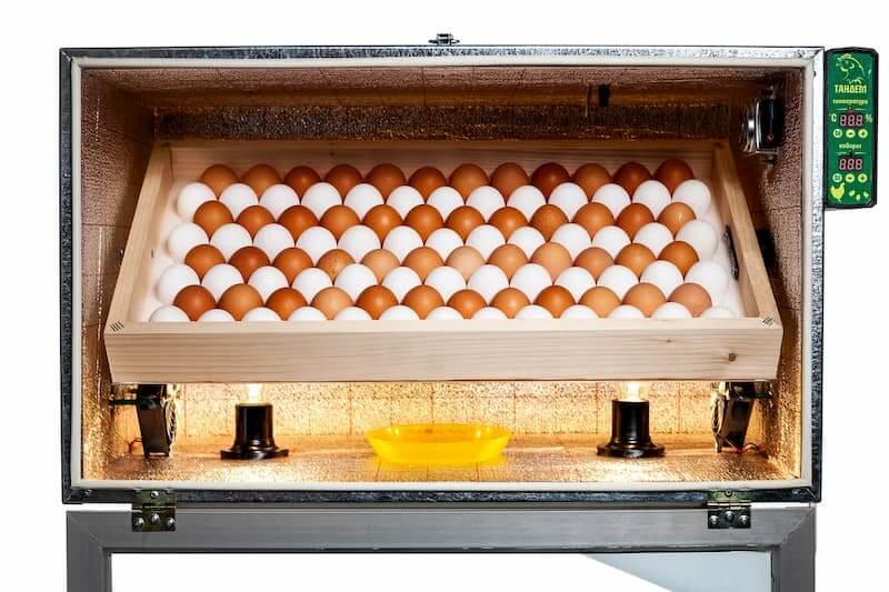 Выбираем инкубатор для яиц