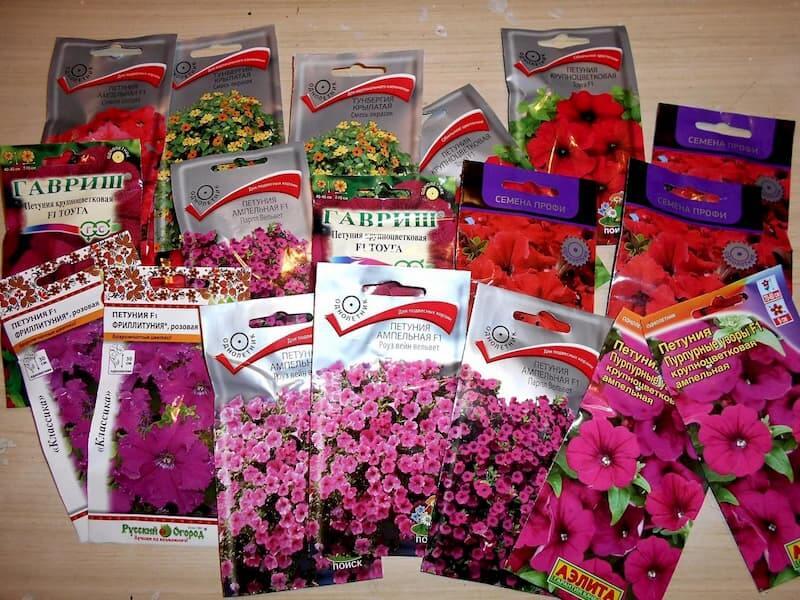 Семена цветов — покупать или заготавливать самому