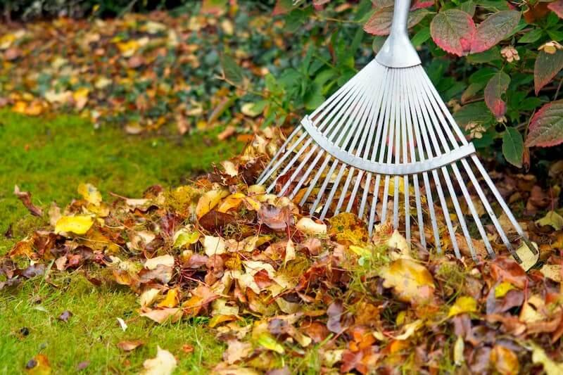 Как быть опавшими листьями?